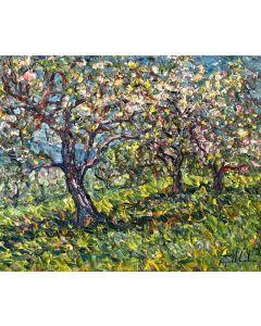 Les pommiers en fleurs - Île d'Orléans